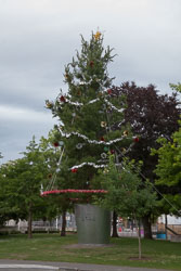 Christchurch_Christmas_Tree_[Real]-003.jpg